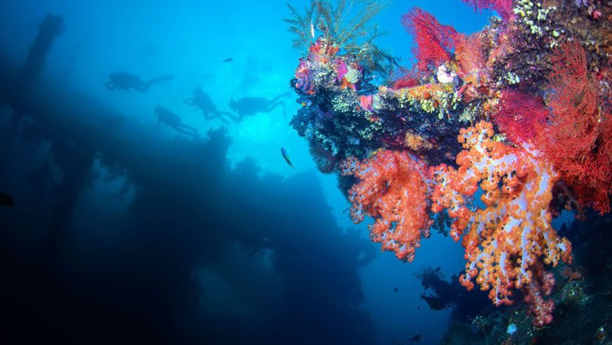 5 Best Dive Sites in Bali